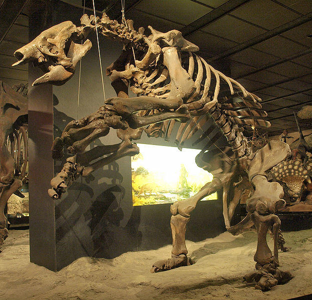 Scientists discover evidence of ancient giant sloths hunted by humans