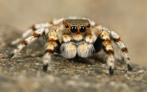 Scientists Train Spider To Jump On Command