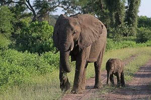 Almost 90 elephants have been found dead near sanctuary