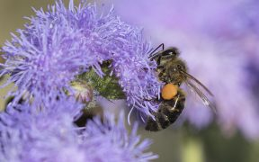 The world's most commonly used pesticide is killing the bee population